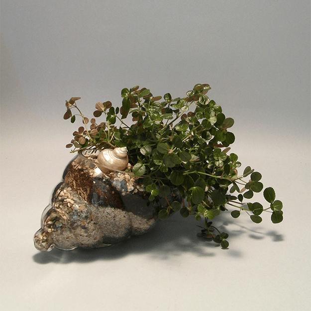 Plante vii