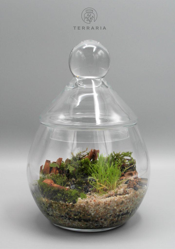 terariu inchis sealed terrarium